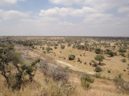 The great plains of Tarangire