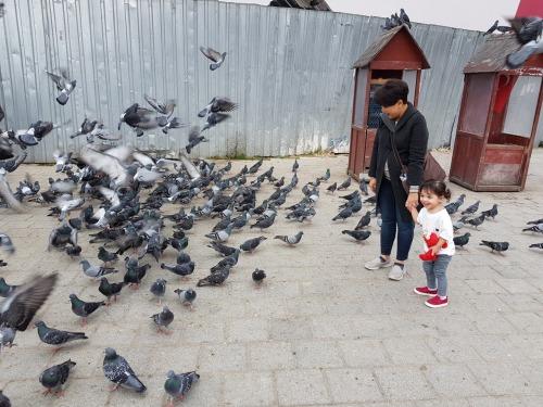 Sofia chasing birds near Spice Bazaar